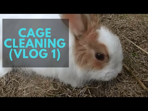 Cage Cleaning (Vlog1)