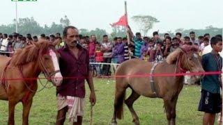 কোটালীপাড়ায় ঘোড়দৌড় প্রতিযোগিতা