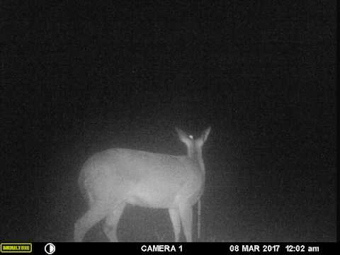 Keep deer out of garden with electric fence