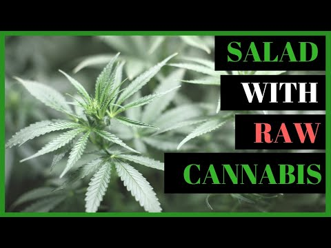 Salad with Raw Cannabis Leaves for Cancer Prevention
