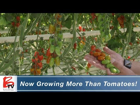 Now Growing More Than Tomatoes & Cucumbers! - Village Farms Inc.