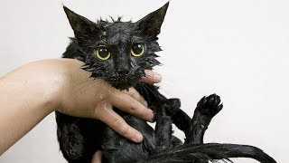Funny Cats Hate Baths - Funny Cat Videos