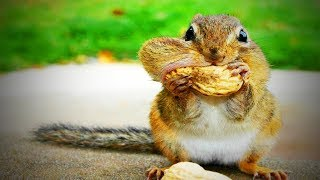 Funny Squirrels 😍 Funny and Cute Squirrels (Part 2) [Funny Pets]