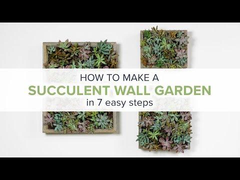 How to Make a Succulent Wall Garden