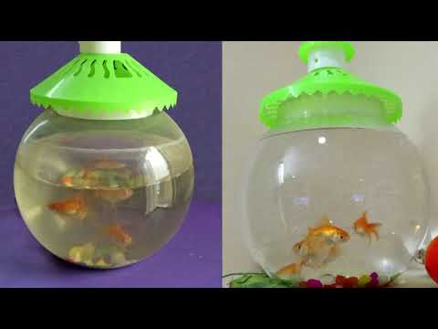 How to clean fish bowl