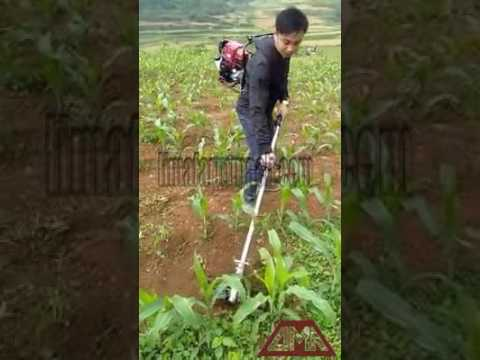 Farmers Use Our Weeding Machine to Remove Weed in Maize Lands