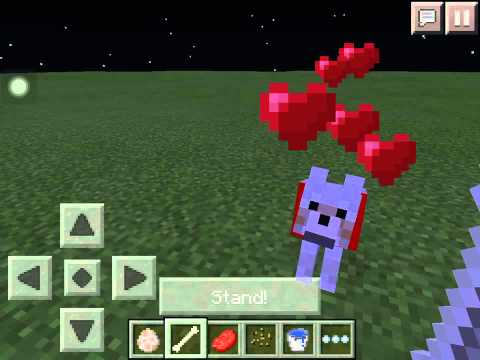 How to tame a wolf in Minecraft Pocket Edition