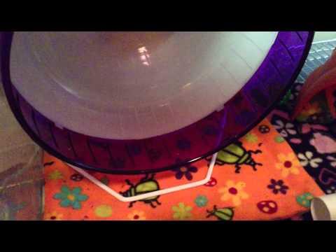 SPEEDY HEDGEHOG WHEEL WASHING TRICK! READ 03/26/15