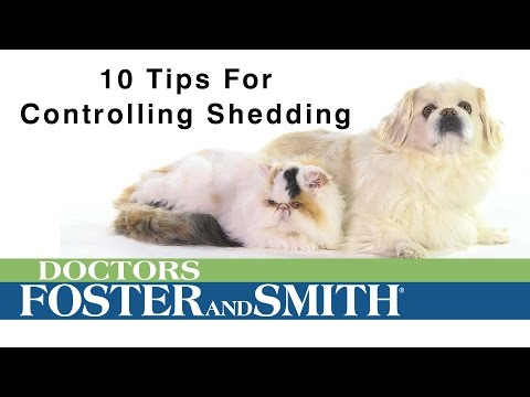10 Tips to Control Pet Shedding | DrsFosterSmith.com