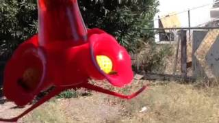 Bee guard hummingbird feeders