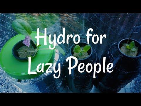 Lazy Hydroponics in My Apartment Window | Kratky Hydro
