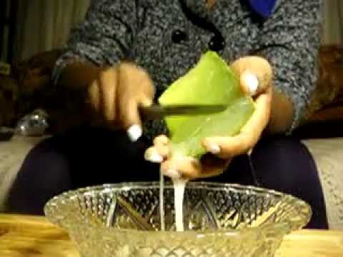 Aloe plant how to release the gel