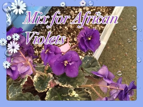 How to make African Violets mix AT Home🌺
