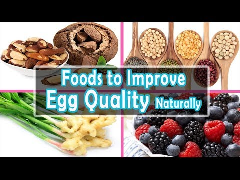 Fertility Diet to Improve Egg Quality | Top 7 Fertility Foods to Improve Egg Quality Naturally
