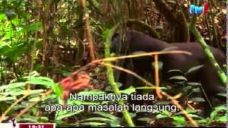 National Geographic Mystery Gorilla Part 1