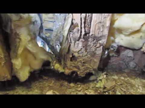 Bad termite damage Westborough, Ma | Bug Bully Pest Control