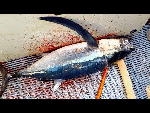 Fishing the Hokitika Trench in New Zealand