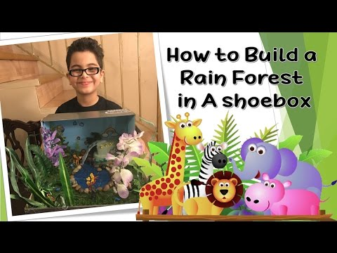 How to Make a Rainforest in a Shoebox for  Science School Project