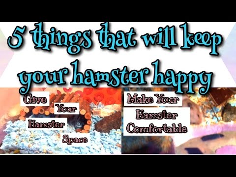 5 things to keep your hamster happy