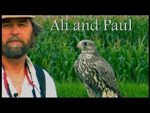 Ali and Paul, training a Gyrfalcon. A Binary Recording Studio Production, Bellingham Wa.