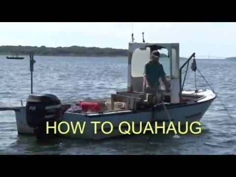 How to Quahaug.... How to dig for Clams