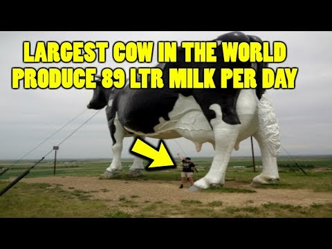 TOP 10 Facts About India that You Don't Know