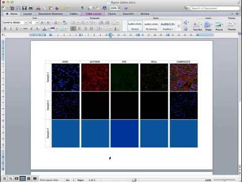 Producing a Figure for publication containing microscopy images in MS Word