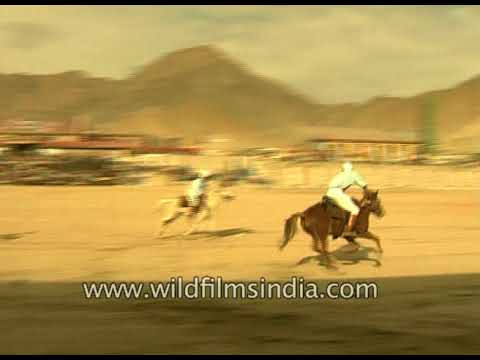 High altitude Polo in Ladakh: pushing horses to their limits