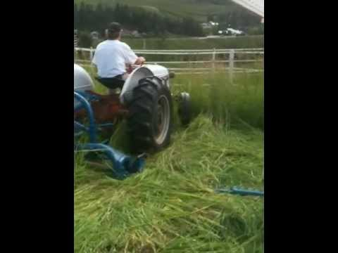 mowing with Ford 8N and refurbished 501 sickle bar mower #1