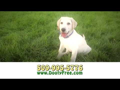 Dog Waste Removal Services for your Yard. Dog Poop Clean Up in Spokane, Spokane Valley. Dooty Free