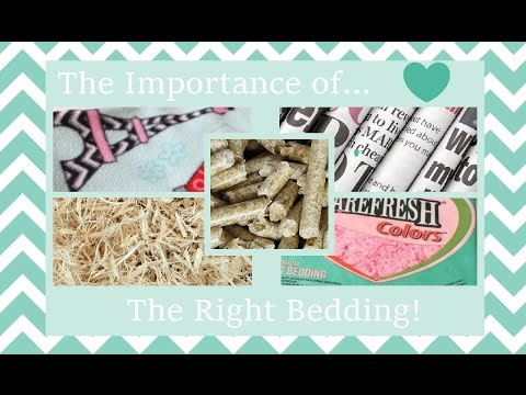The Importance Of The Right Bedding For Your Guinea Pig