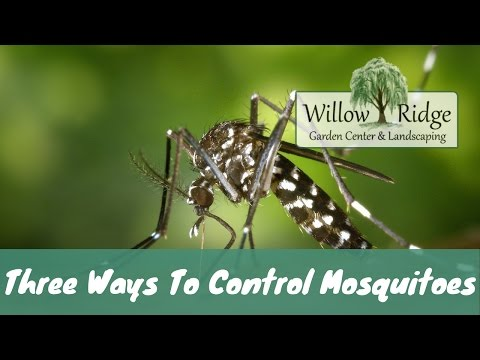 Three Ways To Control Mosquitoes In Your Yard