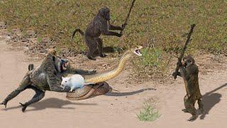 OMG! Capuchin Monkey Save Mouse From Banded Krait Snake Hunt   Amazing Python vs Big Cat