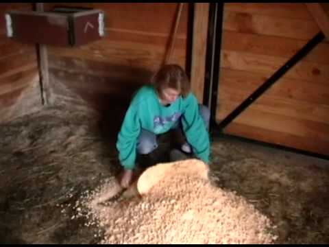 Bedding pellets or shavings for horse bedding?