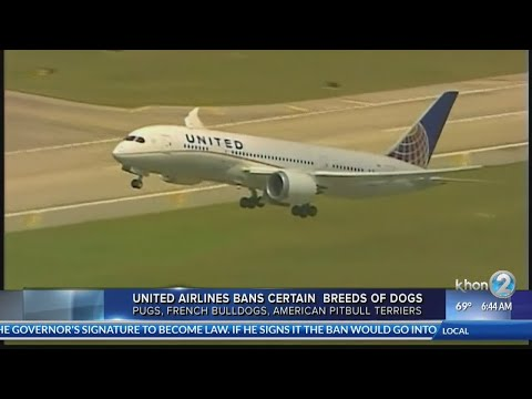 United Airlines bans certain dog and cat breeds from cargo hold