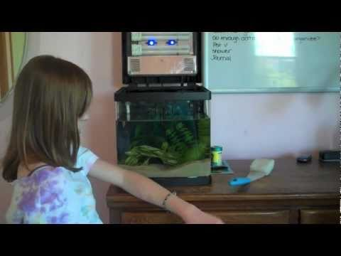How to Clean a Fish Tank!