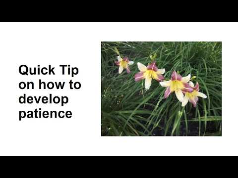 Quick Tip on How To Develop Patience