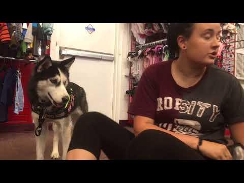 Service Dog Response Training (DPT)