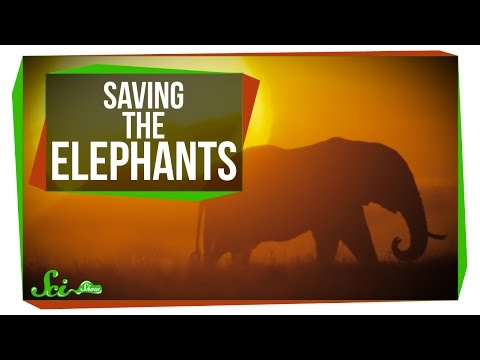 Saving the Elephants with Carbon Dating