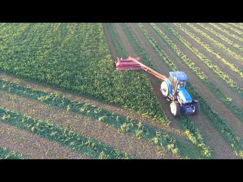 Cutting Hay New Holland H7450 Discbine