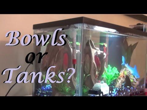 Betta Fish: Bowls vs Tanks | Non Biased FACTS