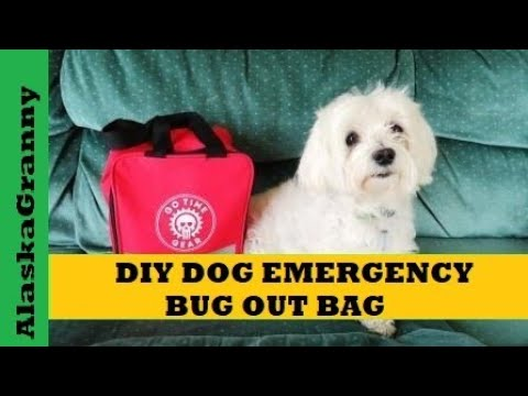 Emergency Bug Out Bag for Dogs DIY