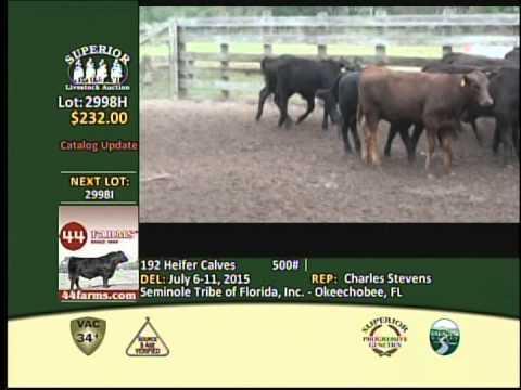 The Seminole Tribe of Florida - SLA cattle lots