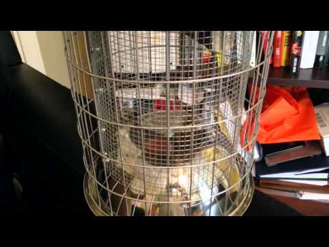 Review of the Original Skinny Squirrel Proof Bird Feeder