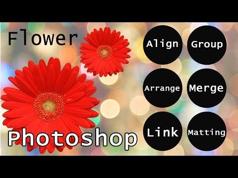 #67 Layer - Arrange, Align, Link, Merge, Matting, group, flatten, Rasterize in Adobe Photoshop