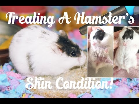 Treating A Hamster With Ringworm