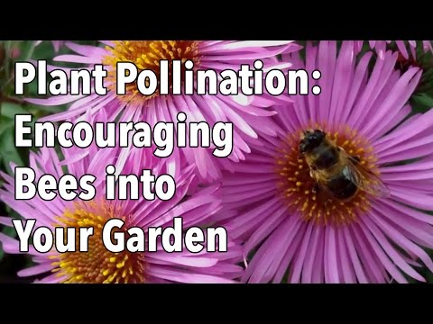 Plant Pollination - How to Encourage Pollinating Bees into Your Garden