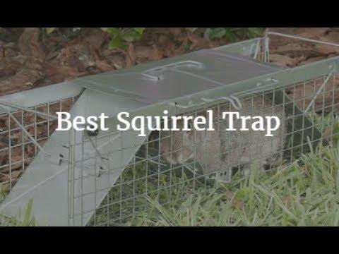 Best Squirrel Trap 2018