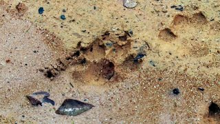 Get A Crash Course In Identifying Animal Tracks | Lone Star Law