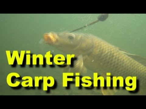 Winter carp fishing in Utah - Stalking carp in shallow water